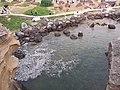 TW 台灣 Taiwan 新台北 New Taipei 萬里區 Wenli District 野柳地質公園 Yehli Geopark August 2019 SSG 165.jpg