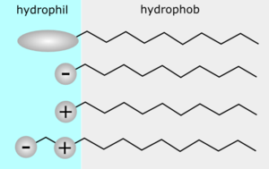 TensideHyrophilHydrophob.png