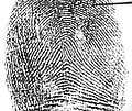 Tented arch in a left index fingerprint.jpg