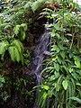 Teplice, skleník Tropicana, tropický skleník, vodopád (01).jpg