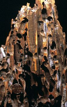 Wood preservation - Wikipedia