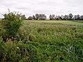 Teversham Fen landscape - geograph.org.uk - 38521.jpg