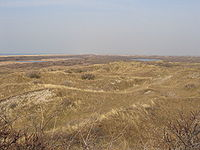 Texel dunes.JPG