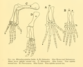 The Osteology of the Reptiles-191 kijhghg rt.png
