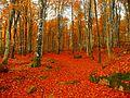 The october forest - Hulevik 2008 - panoramio.jpg