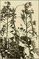 The ornamental trees of Hawaii (1917) (14579267260).jpg