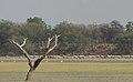 Thol Lake - Gujarat, India - Flickr - Emmanuel Dyan (1).jpg
