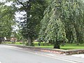 Thornhill Street gardens - geograph.org.uk - 954904.jpg