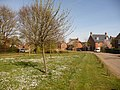 Throop, a carpet of daisies - geograph.org.uk - 1240059.jpg