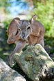 Tierpark Goldau (4980102187).jpg