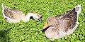 Tierpark Hellabrun - birds.jpg