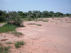 Tiger bush - Vegetation band in a tiger bush near Zamarkoye, Burkina Faso.