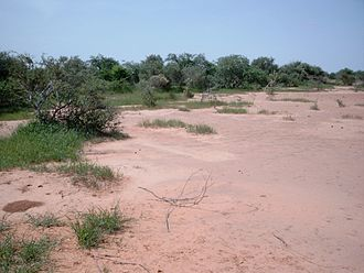 Sylvo-Pastoral and Partial Faunal Reserve of the Sahel - Tiger bush in the northern part of the reserve.