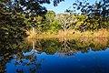 Tikal ruinas-watch for crocodiles - (6849870880).jpg
