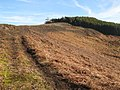 Track and moorland north of Beldon End Plantation - geograph.org.uk - 701108.jpg
