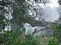 Tree - panoramio (16).jpg