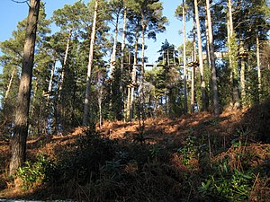 Haldon Forest - Treetop obstacle course in Haldon Forest
