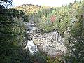 Tsuga caroliniana Linville Falls 4.jpg