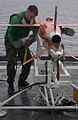 US Navy 060608-N-9851B-007 Machinery Repairman 2nd Class Donald Usher assigned to Commander Fleet Activities Okinawa Drone Detachment, removes a jet assisted take off (JATO) from a BQM-74E aerial target on the flight deck of am.jpg