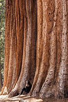 United States - California - Sequoia National Park - 08.jpg