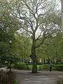 UoL Tree October 22 2011.jpg