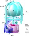 V-ATPaas-et.png