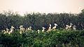 Vedanthangal Bird Sanctuary - Evening.JPG