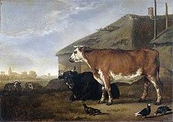 Abraham van Calraet: Cattle