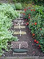 Vegetables at Inverewe Gardens - geograph.org.uk - 247009.jpg
