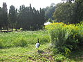 Veltrusy. Kuchyňská zahrada 21.JPG