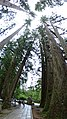Vertical Panorama - Choishi Path - Okunoin Cemetery - Koyasan - Japan - 01 (47949842473).jpg
