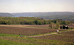 Vineyard and Cayuga Lake, New York, 1991.jpg