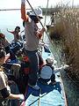 Voluntariat a l'Albufera, netejant les motes al 2008.JPG