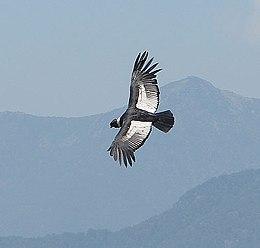 condor gewinnspiel vogel-corporatemedia.com