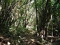 Walkway in Raroa Reserve.jpg
