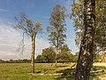 Wandelen over de Planken Wambuis vanuit Mossel 22.jpg