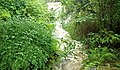 Waterfall, Crawfordsburn Glen (7) - geograph.org.uk - 913136.jpg