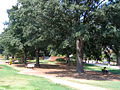 West Yellow Jacket Park.jpg