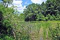 Wetland in Menomin Park, Menomonie, WI (5910104692).jpg