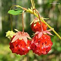 Wild Strawberries (3818497296).jpg