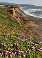 Wild flowers and errosion in Pacifica 1.jpg
