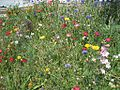 Wildflower Project South Main District Memphis TN 2012-04-22 012.jpg