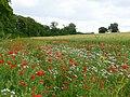 Wildflower headland - geograph.org.uk - 877090.jpg