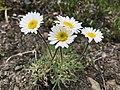 Wildflowers - 36056389900.jpg
