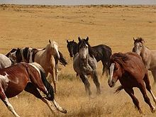 A group of horses running through dry prairie grass