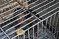 Wildlife trade - scared baby monkey.jpg