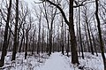 Winter at Arcola Bluffs, Minnesota (39186187201).jpg