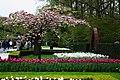 Wiosenny ogród Keukenhof w Lisse-Holandia. - panoramio (9).jpg
