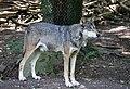 Wolf Tierpark Hellabrunn-2.jpg