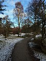 Woodland on Speyside Way heading north from Aviemore - panoramio.jpg